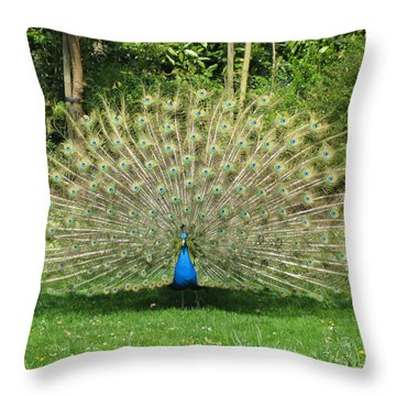 Warwick Castle Peackock Throw Pillow