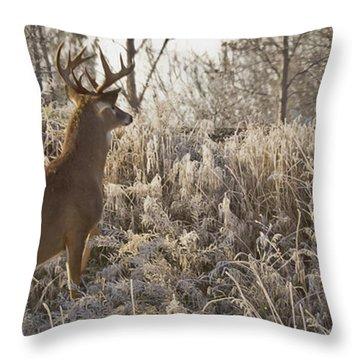 Wary Buck Throw Pillow by Albert Seger