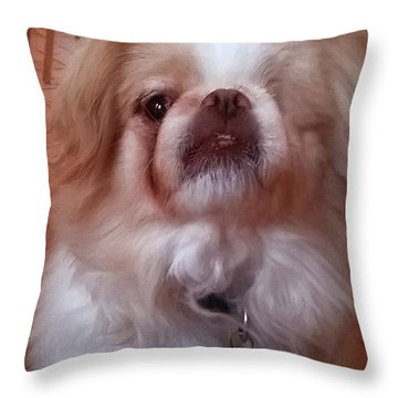 Throw Pillow featuring the photograph Wasabi The Wonder Dog by Roger Bester