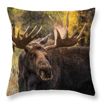 Washakie In The Autumn Beauty Throw Pillow