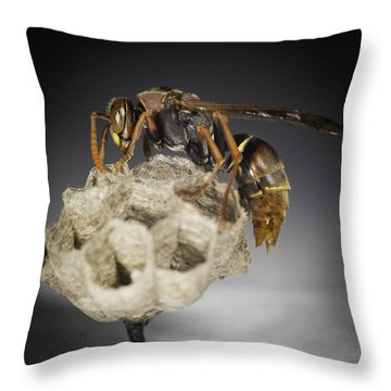Throw Pillow featuring the photograph Wasp On A Nest by Chris Cousins