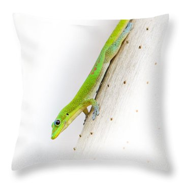 Watch Out Ants...here I Come Throw Pillow