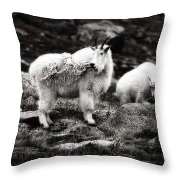 Throw Pillow featuring the photograph Watchful  by Bitter Buffalo Photography
