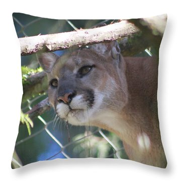 Throw Pillow featuring the photograph Watchful Eyes by Laddie Halupa