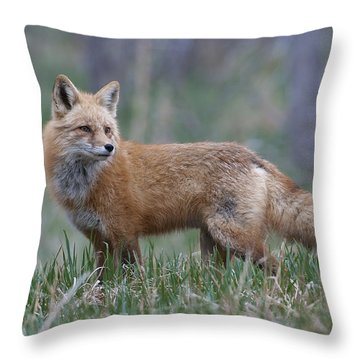 Throw Pillow featuring the photograph Watchful by Gary Lengyel