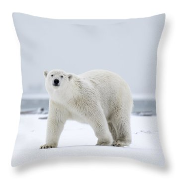 Watchful In The Arctic Throw Pillow