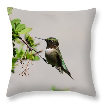Throw Pillow featuring the photograph Watchful Male Hummer by Sandra Updyke