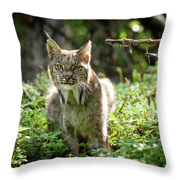 Watchful Mama Lynx Throw Pillow