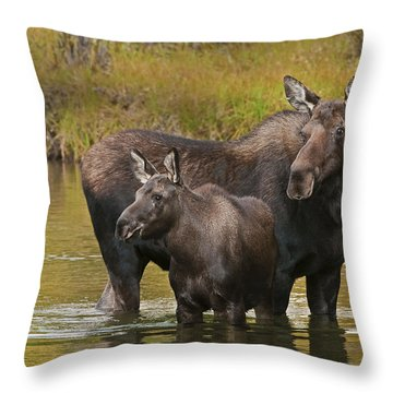 Watchful Moose Throw Pillow by Gary Lengyel