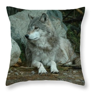 Watchful Wolf Throw Pillow by Sandra Updyke
