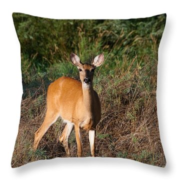 Throw Pillow featuring the photograph Watching Me Closely by Monte Stevens