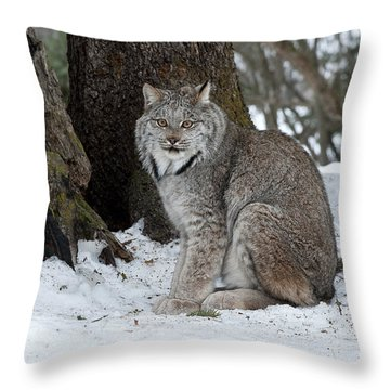 Watching Me Watch You Throw Pillow by Sandra Bronstein