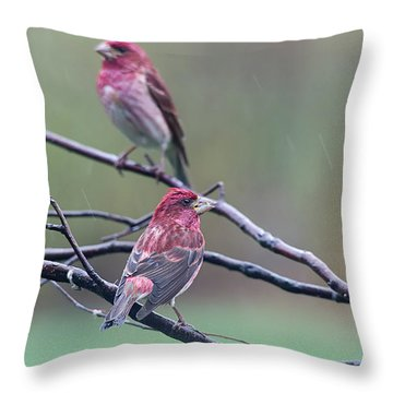 Throw Pillow featuring the photograph Watching Over You by Susan Capuano