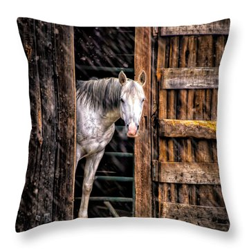 Watching The Snow Fall Throw Pillow by Bob Orsillo