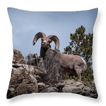 Watching You Watching Me Throw Pillow