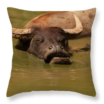 Throw Pillow featuring the photograph Water Buffalo Sleeping by Chris Flees