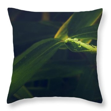 Water Catcher Throw Pillow