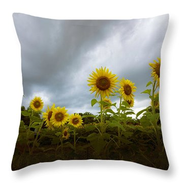 Water Daily Throw Pillow