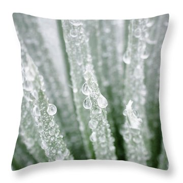 Water Droplets On Silversword Throw Pillow