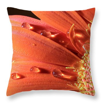 Water Drops On Colorful Flower Petals Throw Pillow