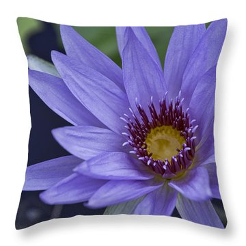 Water Lilly 2 Throw Pillow