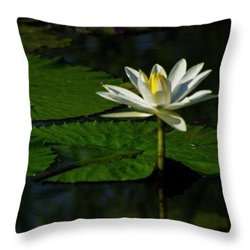 Throw Pillow featuring the photograph Water Lily 1 by Buddy Scott