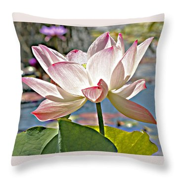 Water Lily Throw Pillow by Catherine Alfidi