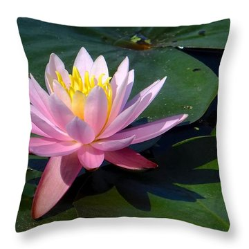 Water Lily In Mountain Lake Throw Pillow