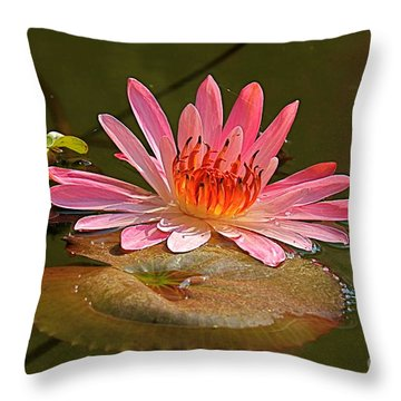 Water Lily Throw Pillow by Nicola Fiscarelli