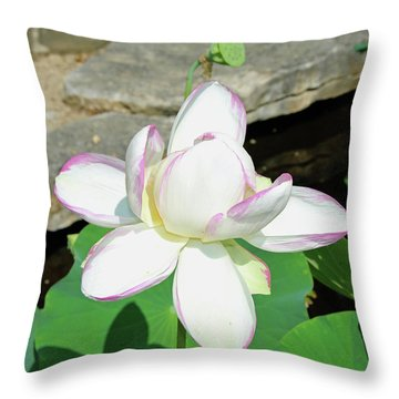 Water Lotus Throw Pillow by Inspirational Photo Creations Audrey Woods