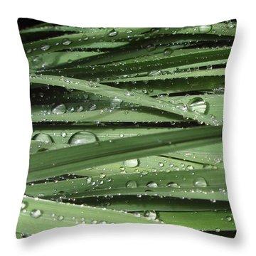 Water On Siberian Iris Throw Pillow