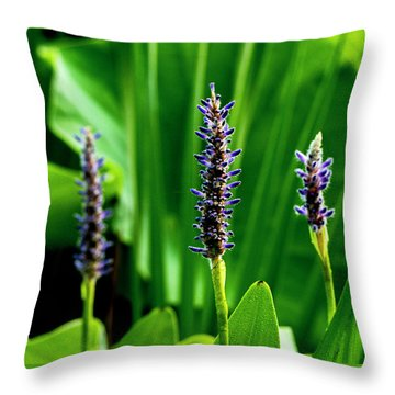 Throw Pillow featuring the photograph Water Plants 2017 1 by Buddy Scott
