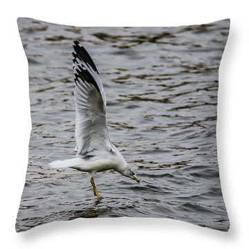 Water Tester Throw Pillow