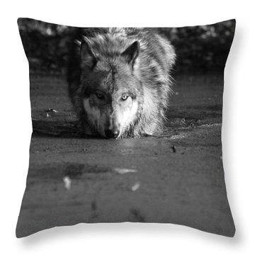 Throw Pillow featuring the photograph Water Wolf I by Shari Jardina