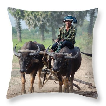 Throw Pillow featuring the photograph Waterbuffalo Driver Returns With His Animals At Day's End by Jason Rosette