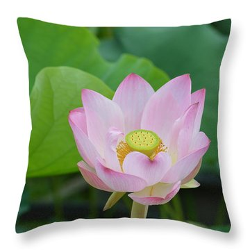 Waterlily Blossom With Seed Pod Throw Pillow by Linda Geiger