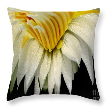 Waterlily Flower Abstract Throw Pillow by Rose Santuci-Sofranko
