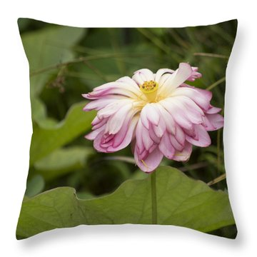 Waterlily Phasing Out Throw Pillow by Linda Geiger
