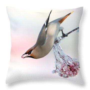 Waxwing Feeding  Throw Pillow