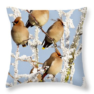 Waxwings And Hoar Frost Throw Pillow