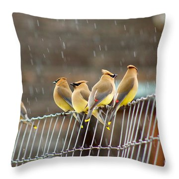 Waxwings In The Rain Throw Pillow