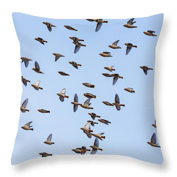 Throw Pillow featuring the photograph Waxwings by Mircea Costina Photography