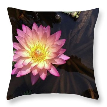 Nature Seekers Throw Pillows