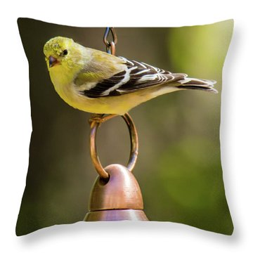 Throw Pillow featuring the photograph We Need More Food Mr. Jackson by Robert L Jackson