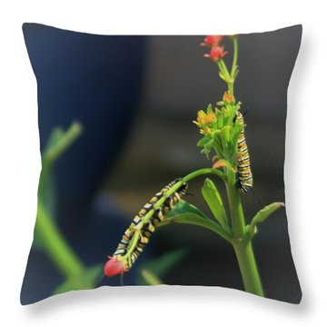 We Need To Get Together And Have Lunch Throw Pillow by John Glass