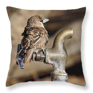 Weaver Bird Throw Pillow