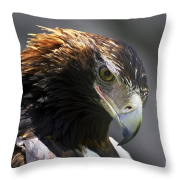Wedge Tail Eagle Throw Pillow by Bill  Robinson