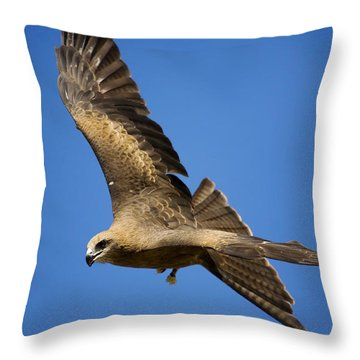 Wedgetail Eagle Flight Throw Pillow by Mike  Dawson