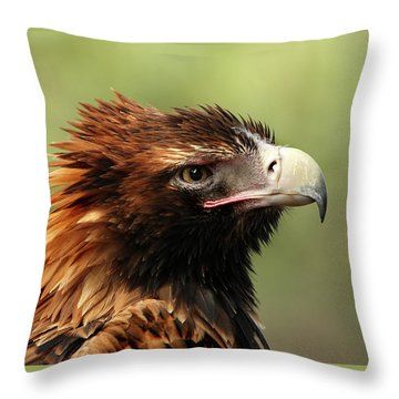 Wedge-tailed Eagle Throw Pillow