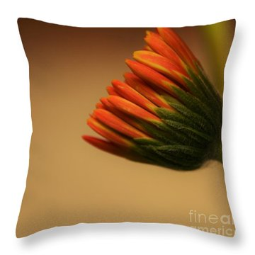 Wee Gerber Daisy In Bloom - Georgia Throw Pillow